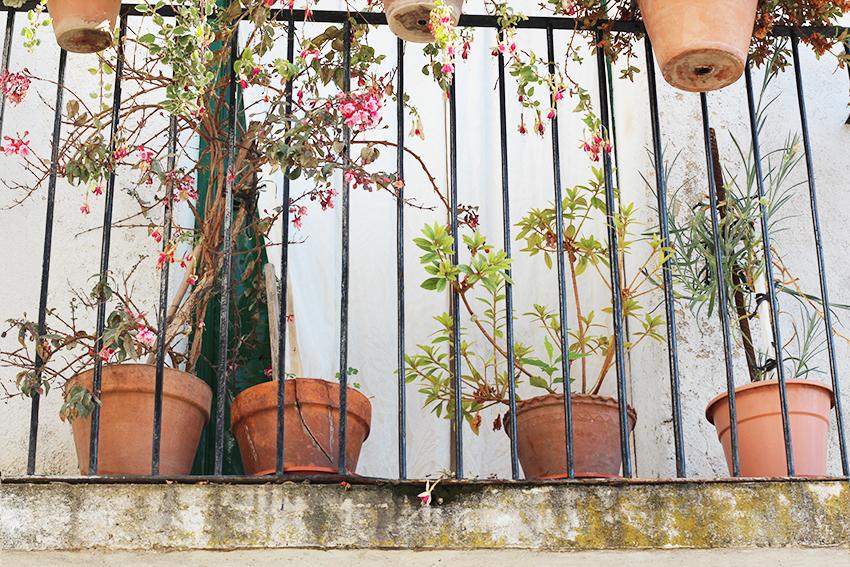 gata balcón macetas