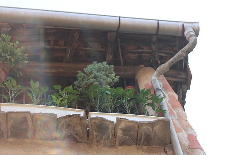 gata balcon resplandor