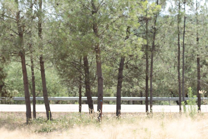 gata bosque carretera