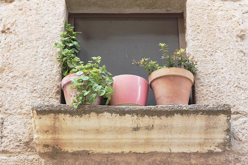 gata ventana maceta rosa
