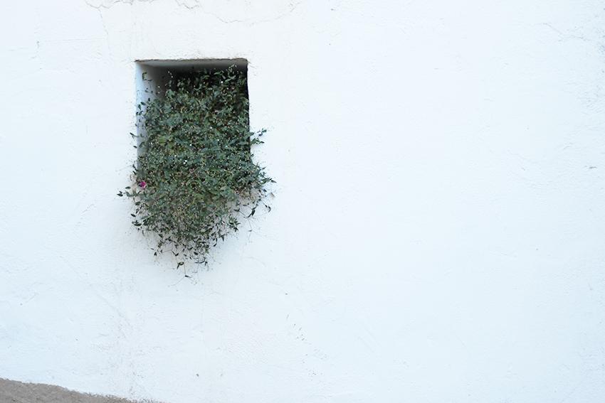 gata ventana pequeña blanca