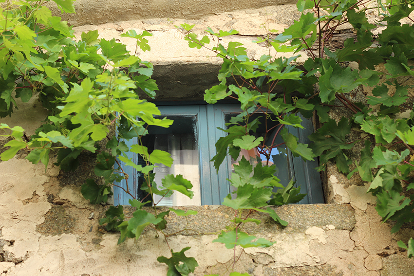 gata ventana verde
