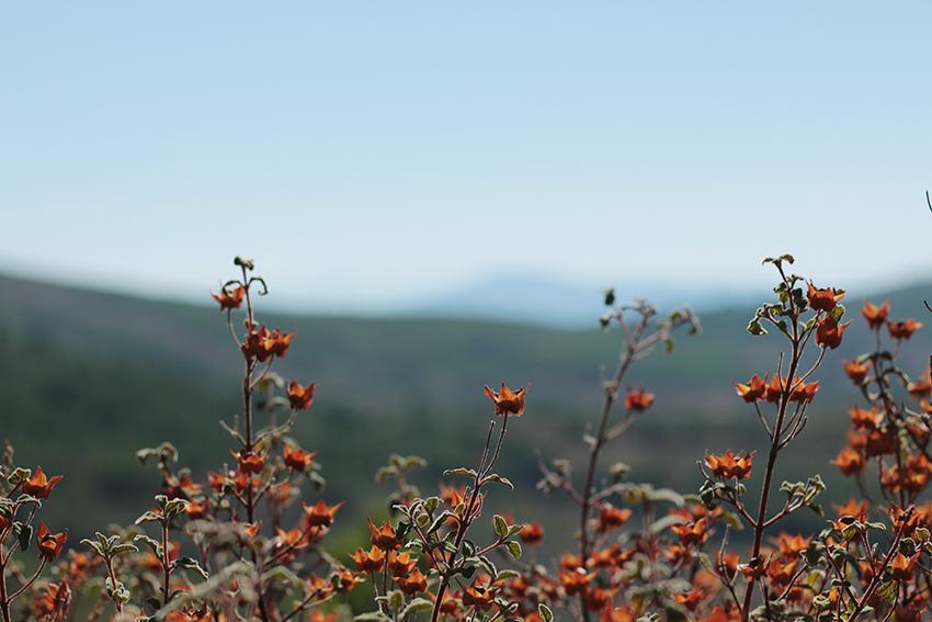 Gata-Villasbuenas flores rojas