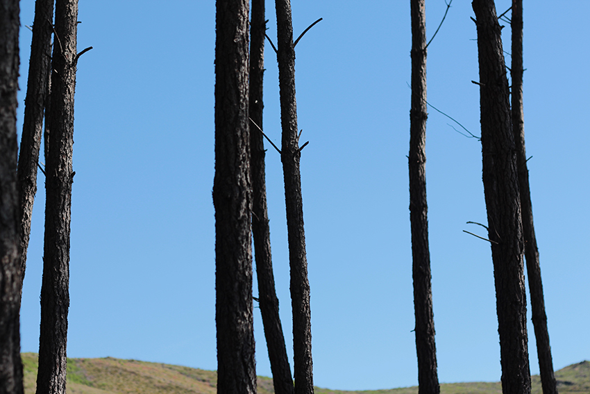 Gata-Villasbuenas troncos pinos