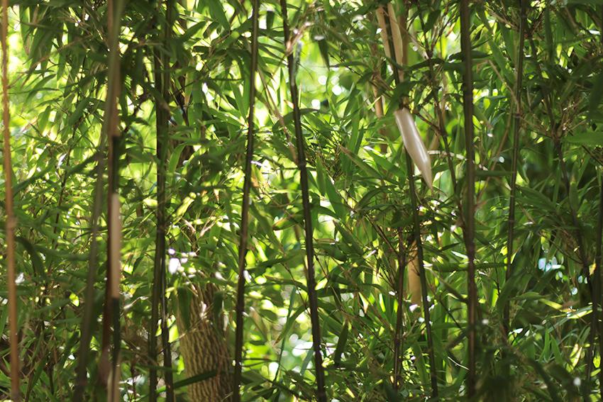 gata jardín bambus hojitas