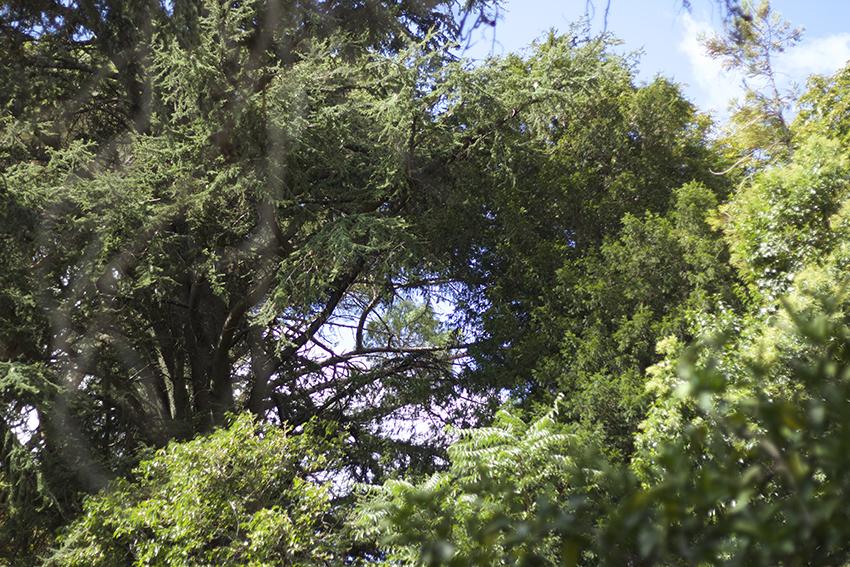 gata jardín copas árboles