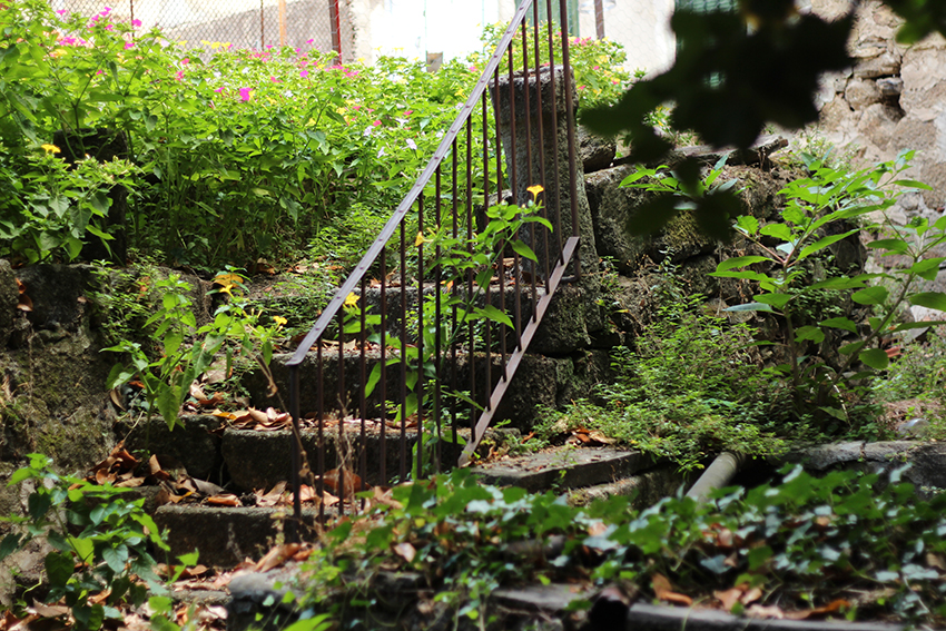 gata jardín escaleras