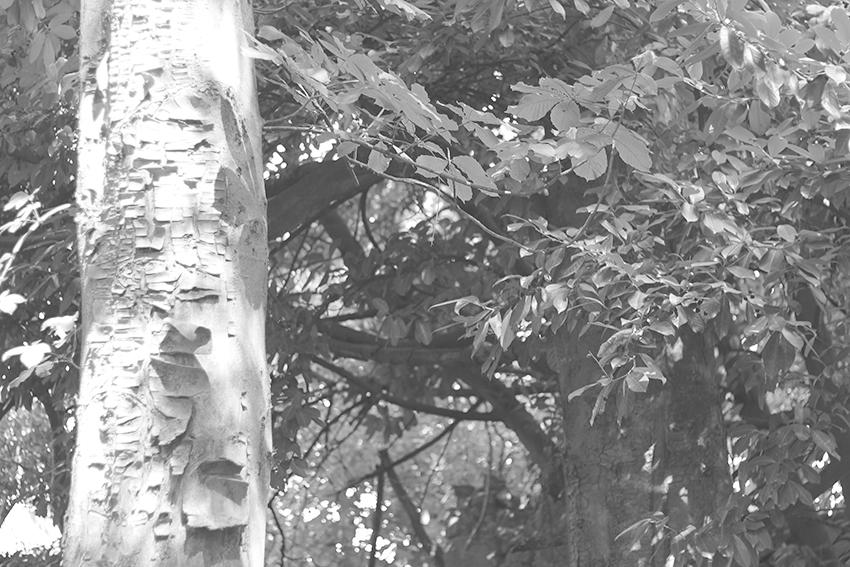 gata jardín hojas BN