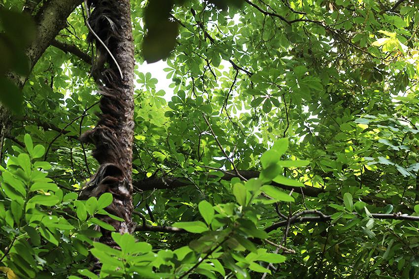 gata jardín hojas verdes