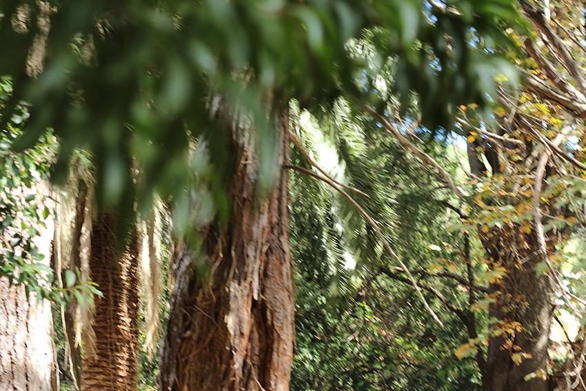 gata jardín troncos