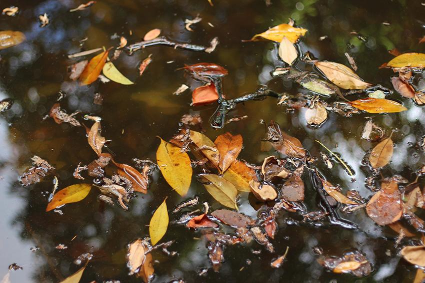 gata jardin hojas flotando