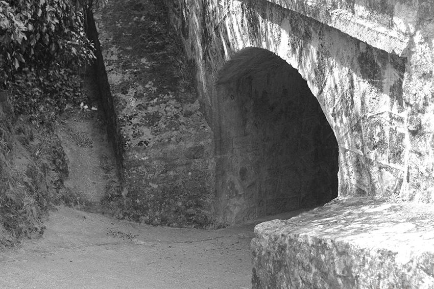 gata puente en BN