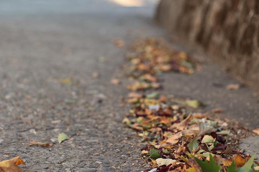 Villasbuenas hojas suelo