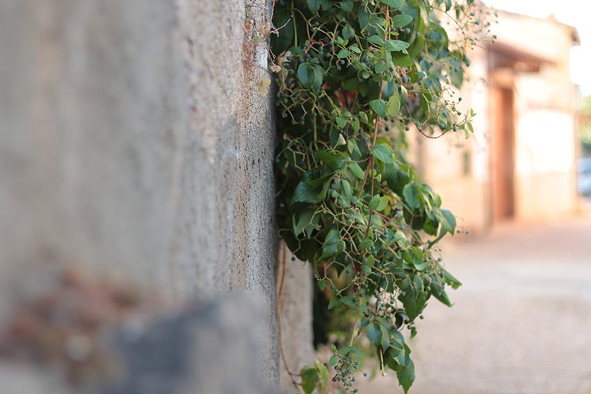 Villasbuenas hojas