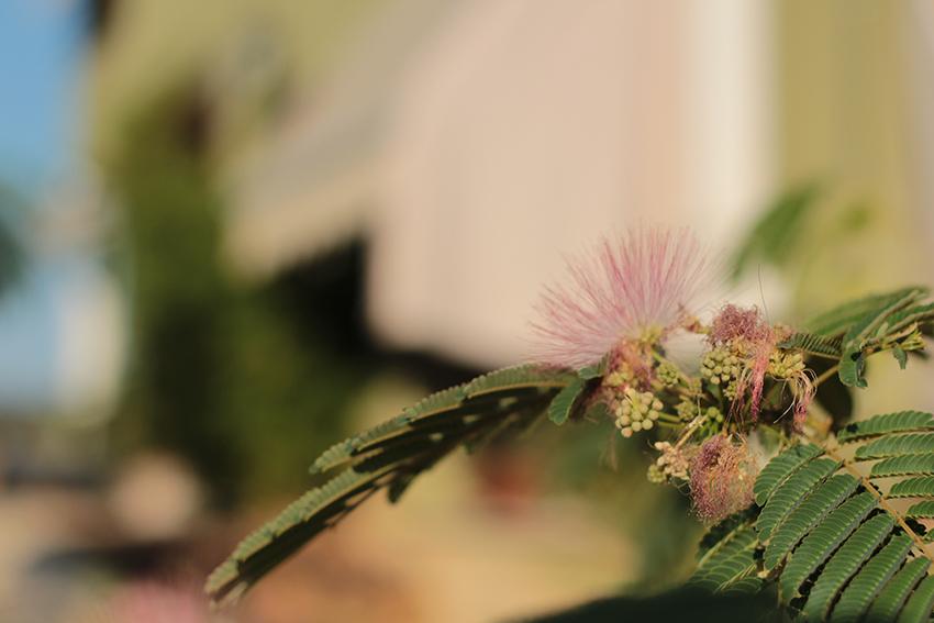 Villasbuenas paraisos flor casa