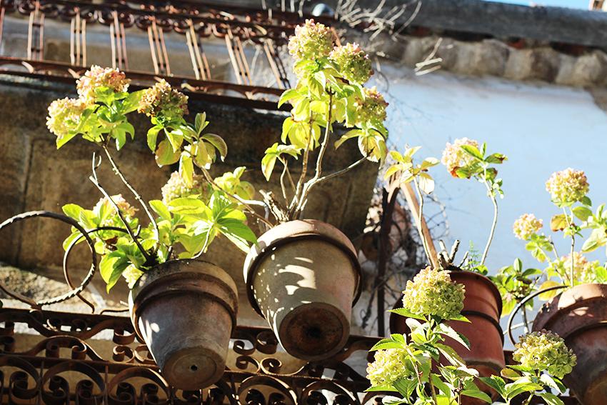 hoyos balcon hortensias detalle