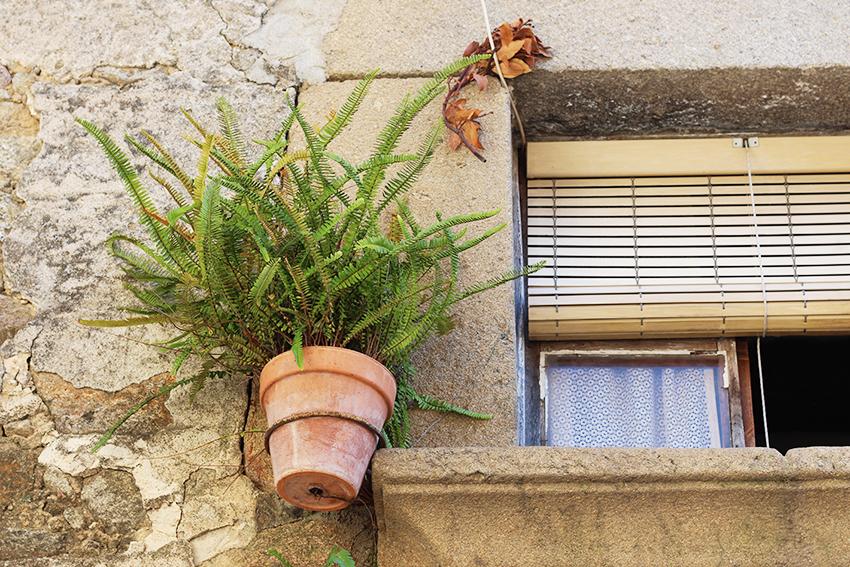 hoyos ventana helechos
