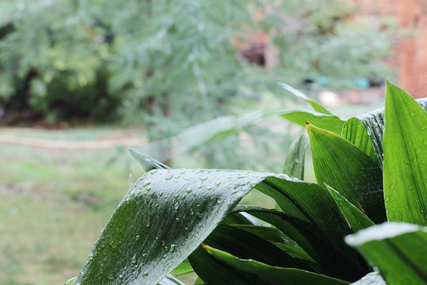 sara planta