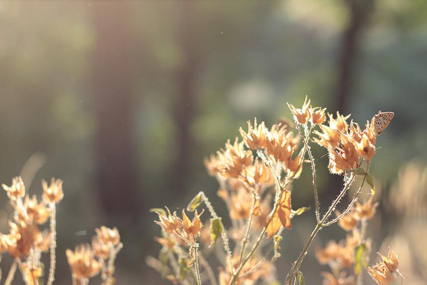 villasbuenas florecillas doradas mariposa