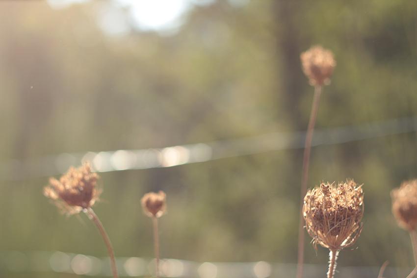 villasbuenas paraisos flores doradas