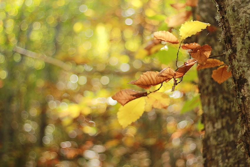 hoyos bianca hojas arboles