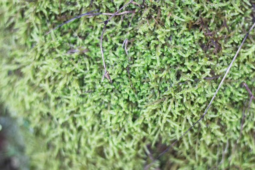 hoyos huerta musgo