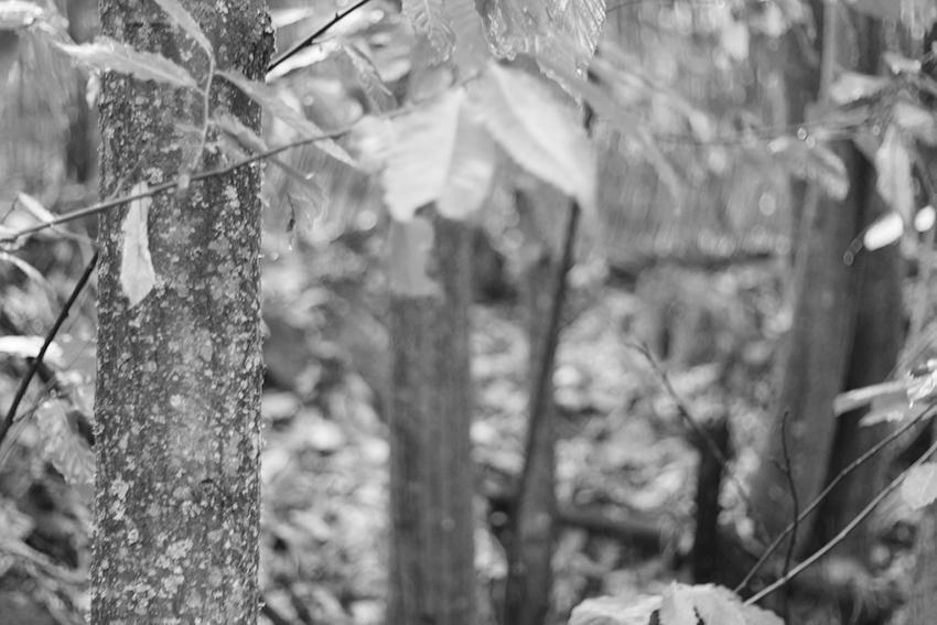 hoyos julia castaño