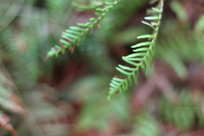 hoyos julia helicho verde