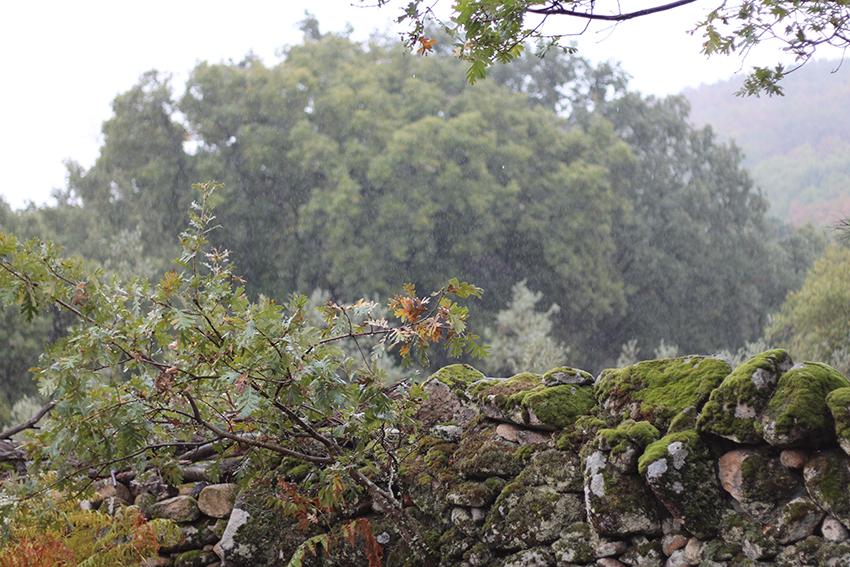 hoyos julia lluvia