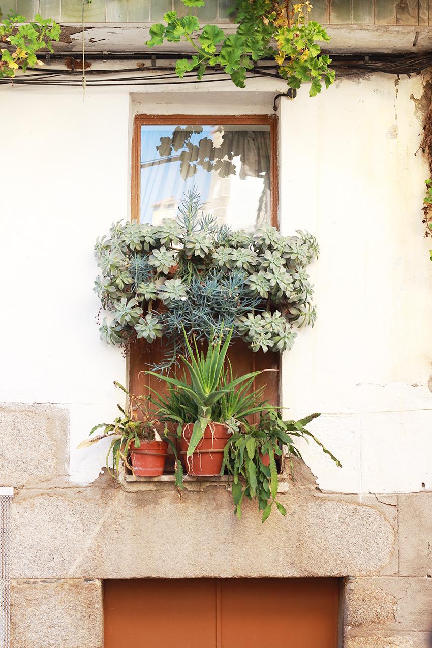 cilleros balcon aloe