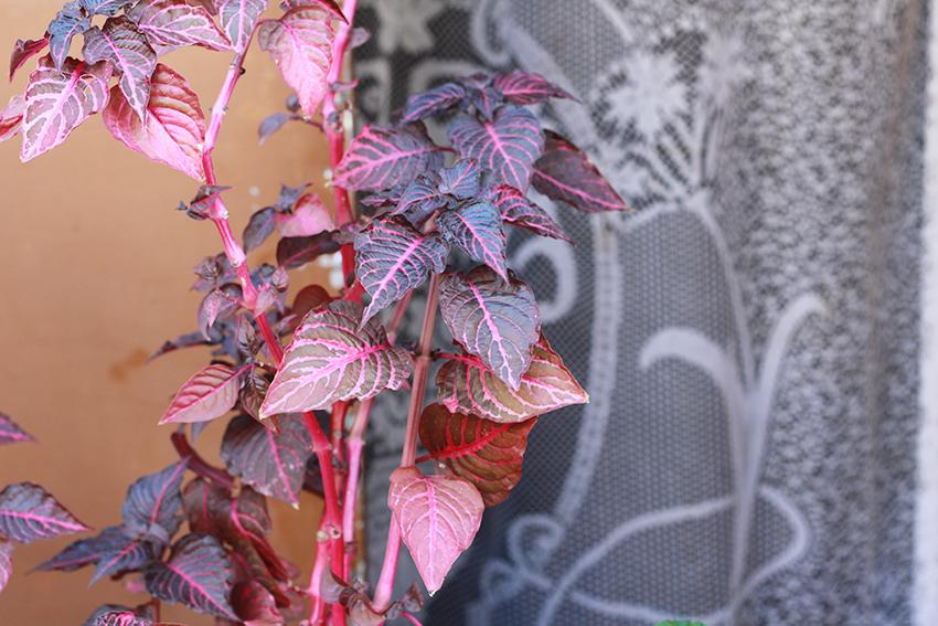 cilleros flor roja