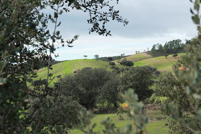 cilleros mina montañas verdes