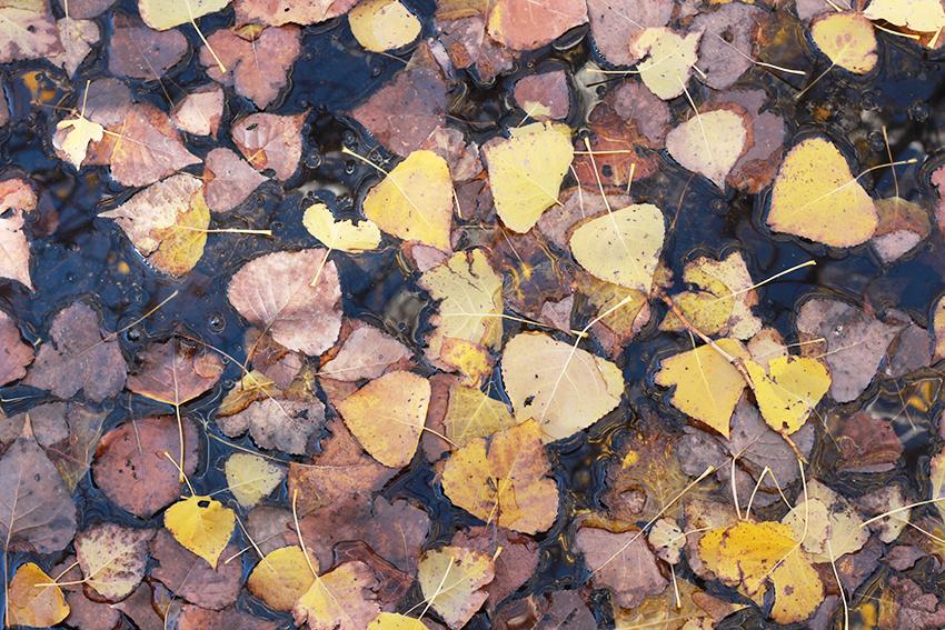 cilleros paraisos belen hojas