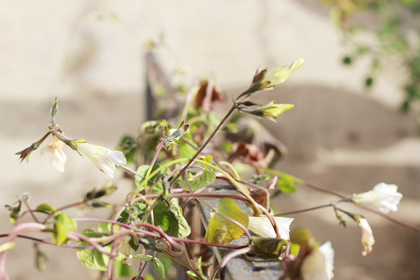 cilleros teofilo flores barandillas
