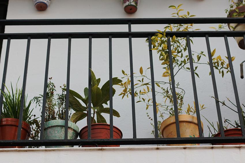 moraleja balcon flores