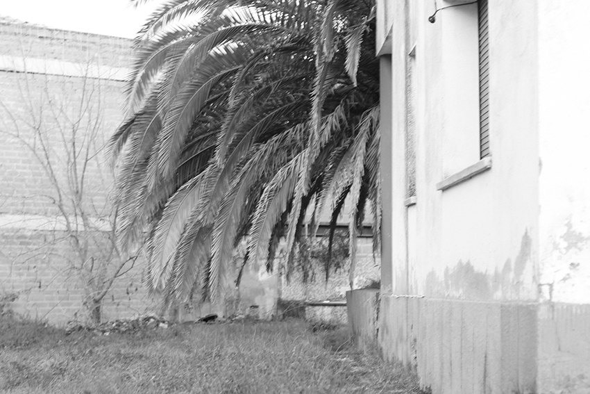 moraleja jardín palmera