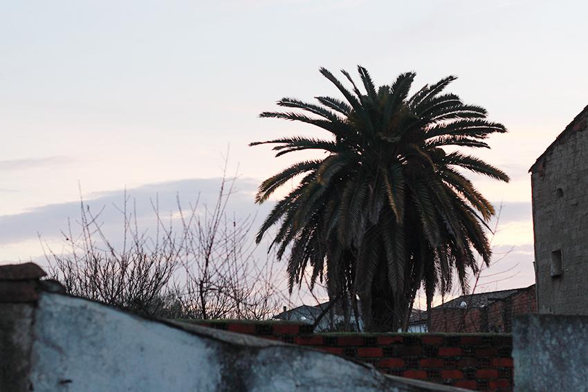 moraleja palmera traseras