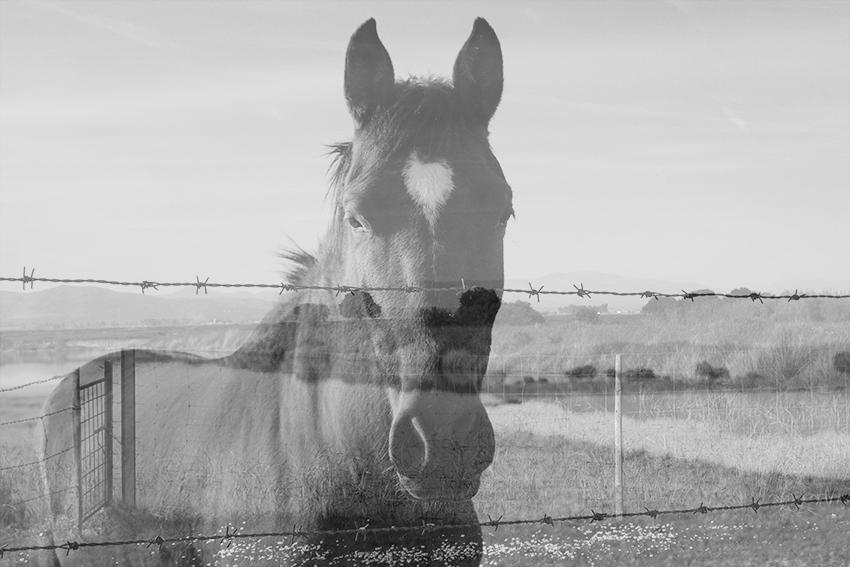 vegaviana charca caballo bn