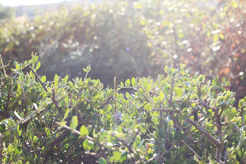santibanez-paraisos-arbol-3