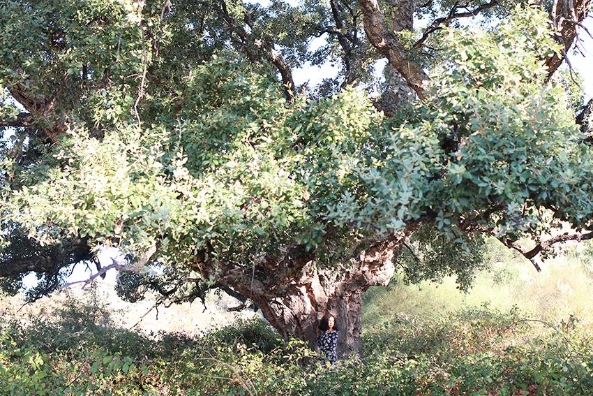 santibanez-paraisos-arbol-6
